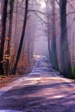 Preview iPhone wallpaper Autumn road, trees, fog, sun