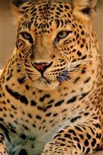 Preview iPhone wallpaper Big cat, predator, leopard