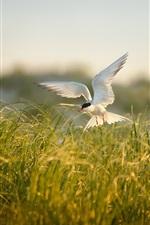 Preview iPhone wallpaper Bird flying, grass, summer