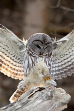 Preview iPhone wallpaper Bird photography, owl, wings, feathers