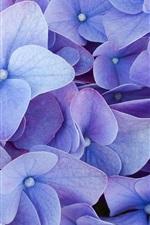 Preview iPhone wallpaper Blue four petals flowers
