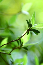 Preview iPhone wallpaper Bokeh green leaves spring