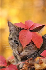 Preview iPhone wallpaper Cat, autumn, leaves
