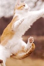 미리보기 iPhone 배경 화면 고양이 아름다운 점프