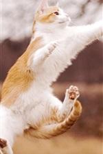 Preview iPhone wallpaper Cat beautiful jumping