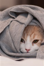 Preview iPhone wallpaper Cat hidden in the clothes, only see face