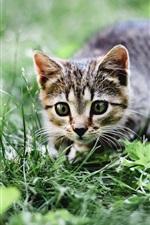 Preview iPhone wallpaper Cat, summer, grass