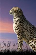 Preview iPhone wallpaper Cheetah, predator, grass, dusk, birds