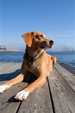 Preview iPhone wallpaper Dog at dock