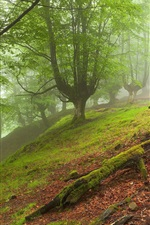 Preview iPhone wallpaper Forest landscape, trees, fog