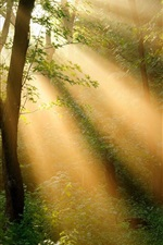 Forest trees, sun rays, nature landscape
