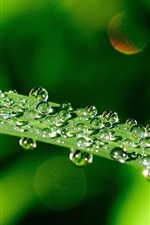 Preview iPhone wallpaper Macro green leaf, water drops