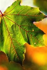 Preview iPhone wallpaper Macro maple leaf, bokeh, fall