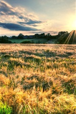Preview iPhone wallpaper Nature landscape, fields, sun rays
