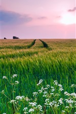 Preview iPhone wallpaper Nature scenery, grass, flowers, summer
