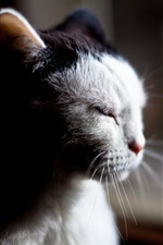 Preview iPhone wallpaper Sleeping cat