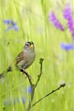 Preview iPhone wallpaper Summer bird in the grass