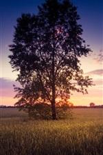 Cenário do sol, árvore solitária, campo de trigo