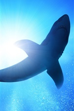 Preview iPhone wallpaper Underwater, blue sea, bubbles, shark