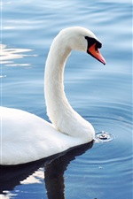 Preview iPhone wallpaper White swan in pond