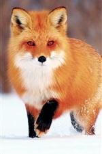 Preview iPhone wallpaper Winter snow, little fox