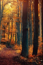 Preview iPhone wallpaper Autumn forest trees, leaves, yellow orange, path, nature scenery