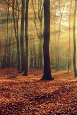 Preview iPhone wallpaper Autumn nature, forest, leaves, trees, light rays