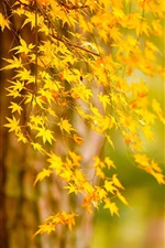 Preview iPhone wallpaper Autumn tree yellow leaves, nature scenery