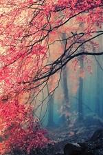 iPhone fondos de pantalla Otoño árbol hojas rojas hermosas en el bosque