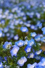 Flores azuis, bokeh