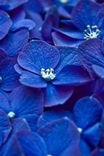 미리보기 iPhone 배경 화면 푸른 꽃에 초점