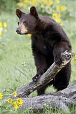 Preview iPhone wallpaper Brown bear, withered tree, yellow flowers