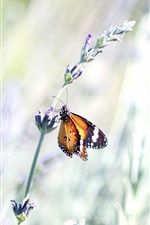 Preview iPhone wallpaper Butterfly, wildflower, bright light