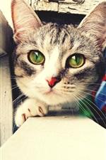 Cat Face close-up, olhos verdes, peitoril da janela