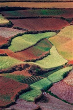 Preview iPhone wallpaper China spring nature, countryside fields, like colorful carpets