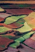 미리보기 iPhone 배경 화면 화려한 카펫과 같은 중국의 봄, 자연, 시골 필드