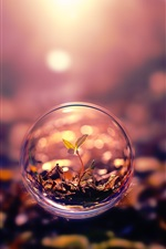 Preview iPhone wallpaper Creative pictures, bubbles, leaves, nature plants