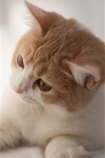 Preview iPhone wallpaper Cute curious cat