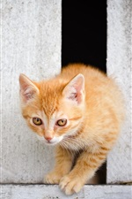 Preview iPhone wallpaper Cute kitten cross the fence