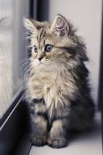 Preview iPhone wallpaper Cute kitten, window sill, looking