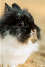 Preview iPhone wallpaper Cute rabbit, black white