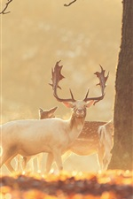 Preview iPhone wallpaper Deer in the forest, warm sun