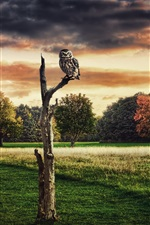 Preview iPhone wallpaper Design collage pictures, trees, dry, owl, red sky