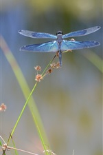Preview iPhone wallpaper Insect dragonfly macro photography