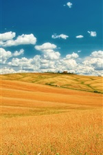 Preview iPhone wallpaper Italy, Tuscany, summer fields, sky, clouds, yellow, blue