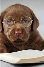 Preview iPhone wallpaper Labrador dog, brown, read a book, glasses