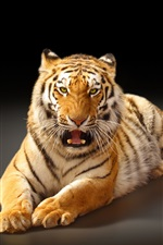 Preview iPhone wallpaper Largest cat, the Amur tiger, black background