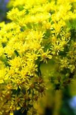 Pequenas flores amarelas na primavera