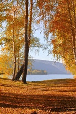 Preview iPhone wallpaper Nature autumn scenery, yellow leaves, trees, lake, mountains