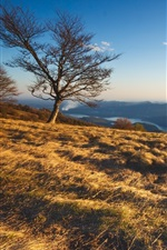 Preview iPhone wallpaper Nature landscape, trees, mountains, grass